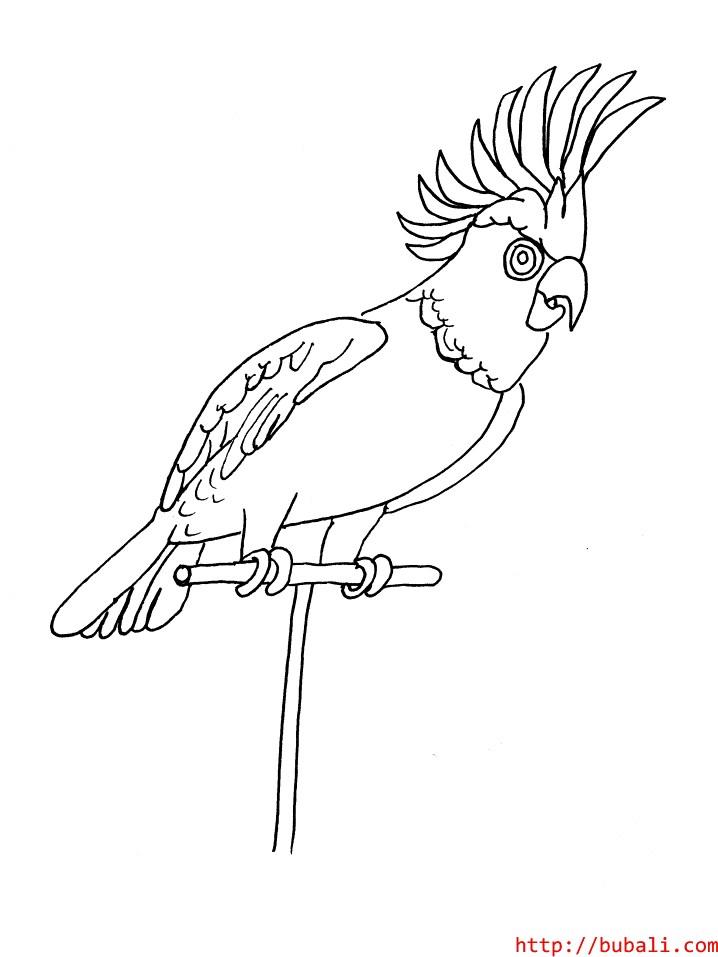 dibujos_para_colorear-parrotbubali