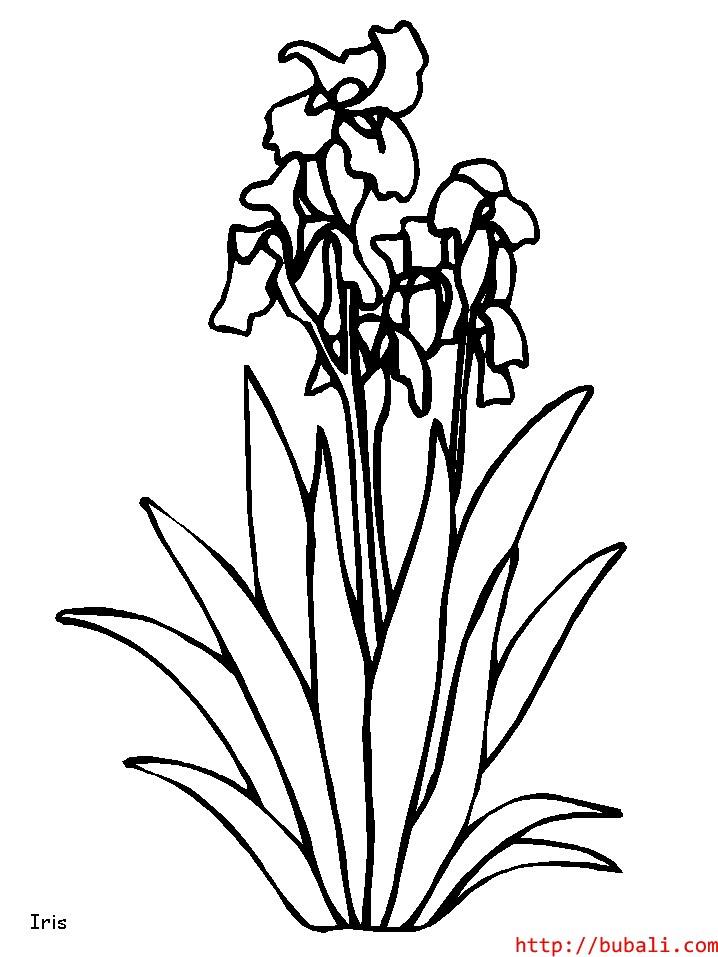 dibujos_para_colorear-4bubali