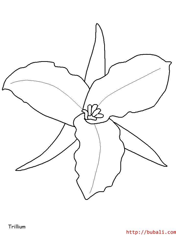 dibujos_para_colorear-6222bubali