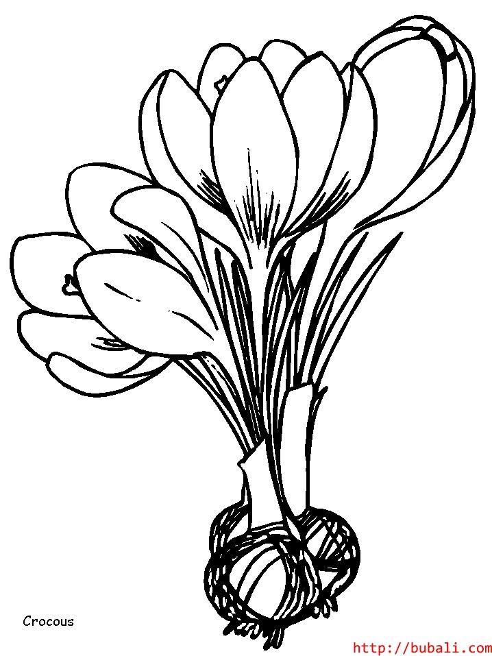 dibujos_para_colorear-8bubali