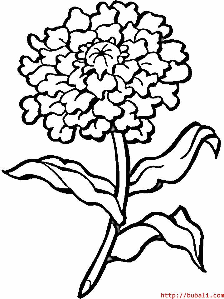 dibujos_para_colorear-flower6bubali